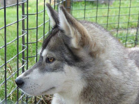 Husky Safari - Day Tours : Eén van de 25 husky's