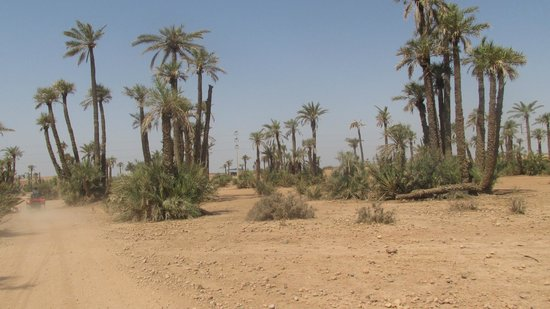 Dunes & Desert Exploration : View of the palm trees while driving