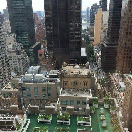 Waldorf Astoria New York: Waldorf rooftop herb garden & view to East River