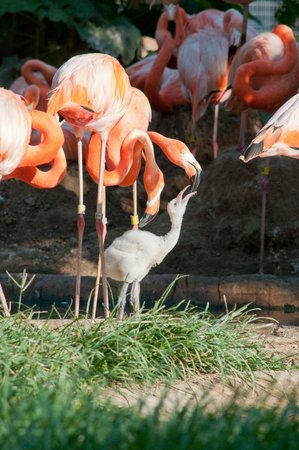 Riverbanks Zoo And Garden Jmb Photography Picture Of