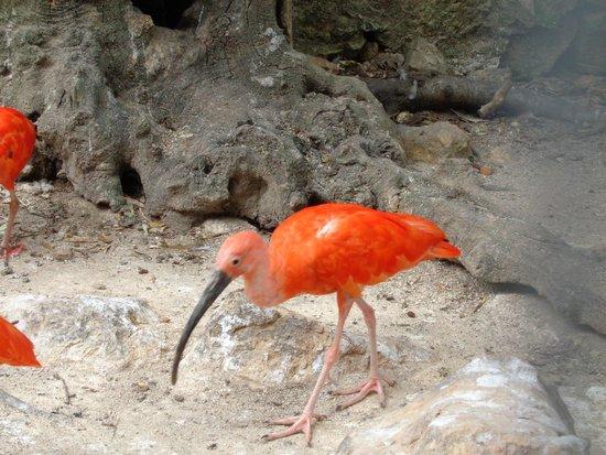 l 39 ibis sacr picture of zoa parc animalier et exotique sanary sur mer tripadvisor. Black Bedroom Furniture Sets. Home Design Ideas