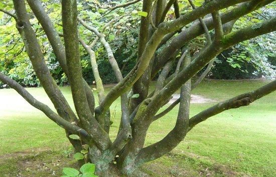 Musee David et Alice van Buuren: Art de jardin