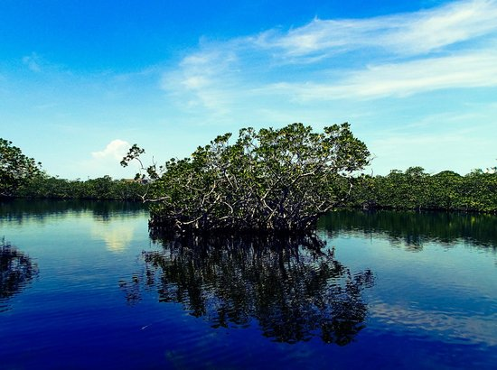 John Pennekamp Coral Reef State Park : Among the mangroves, taken while kayaking in Pennekamp