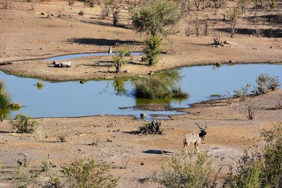 Lokuthula Lodges: Waterhole