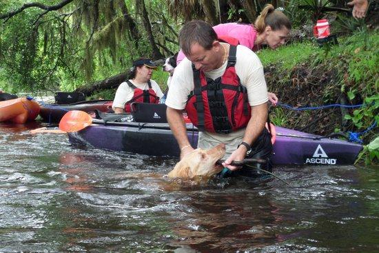 Palm Bay Kayaks: More sharks teeth hunting