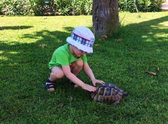 Paloma Grida Resort & Spa : Нашли черепаху