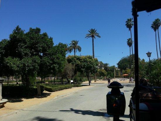 Parc de María Luisa : View along one of the avenidas