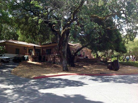 Filoli: 300 Year Old Oak Tree