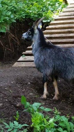 Agritur Agua Biencia: Animali in libertà
