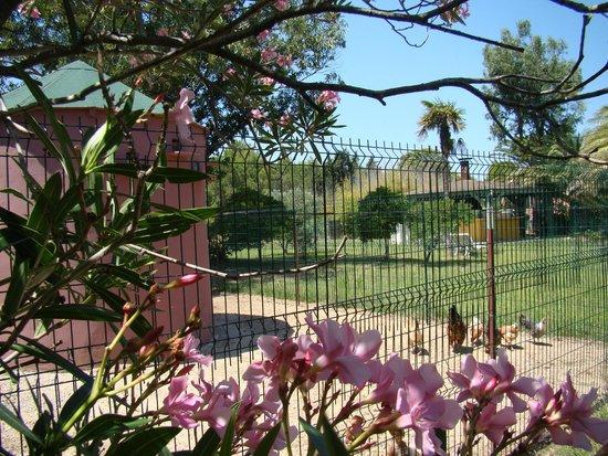 Le Tropic Hotel: le jardin et le poulailler