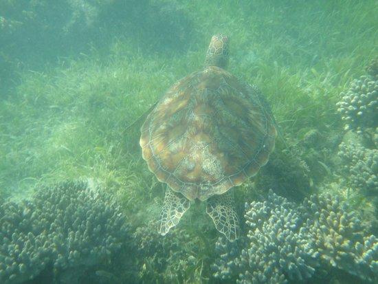 Big Cat Green Island Reef Cruises - Day Tour: Tartarughe intorno a Green Island