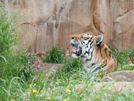 Riverbanks Zoo and Botanical Garden: Riverbanks Zoo and Garden- JMB Photography