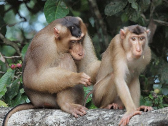 The Last Frontier Boutique Resort : macaques