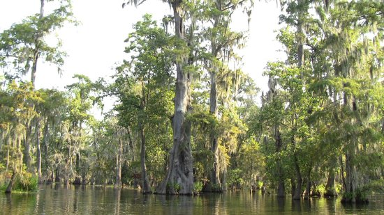 Champagne's Cajun Swamp Tours: Views similar to this for the entire tour.
