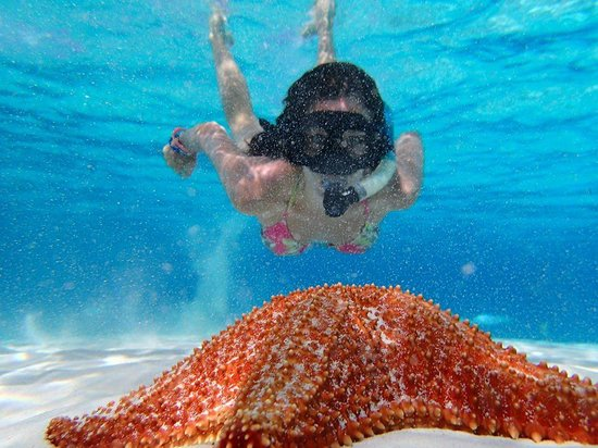 Tiger's Adventures: Beautiful Starfish at Cielo