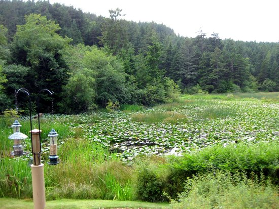 Otters Pond Bed and Breakfast: The pond, photographed from the patio.