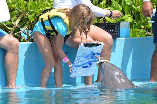 Dolphinaris Riviera Maya Park: painting the Tshirt