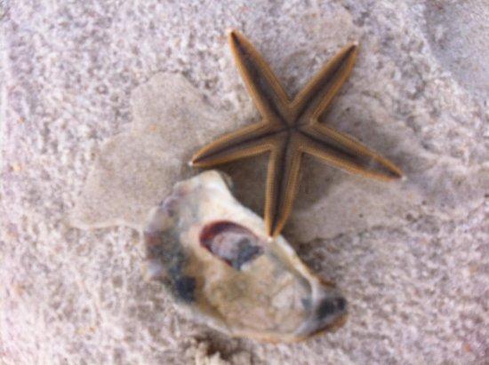 Saint George Island State Park : Found a starfish