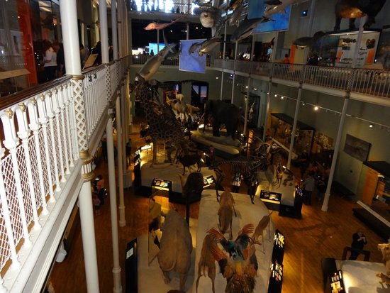Museo Nacional de Escocia: From one of the many level's.