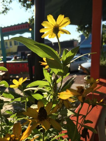 Gecko's: Flower planters at the end of our table.