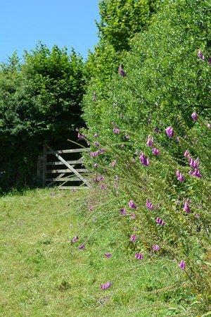Lowertown Farm B&B: Farm Hedges