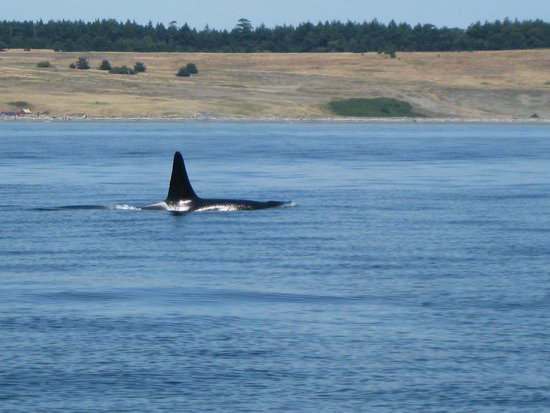 Orcas Island Eclipse Charters : .
