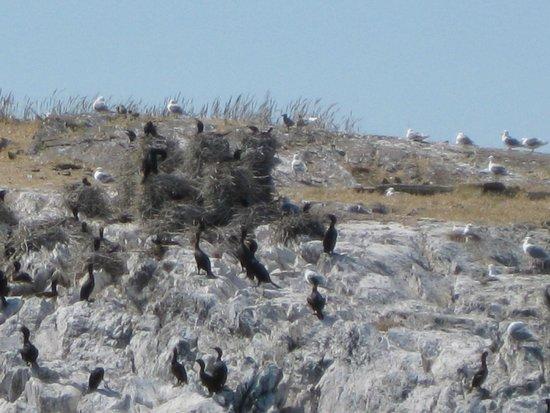 Orcas Island Eclipse Charters : Cormorant condos.