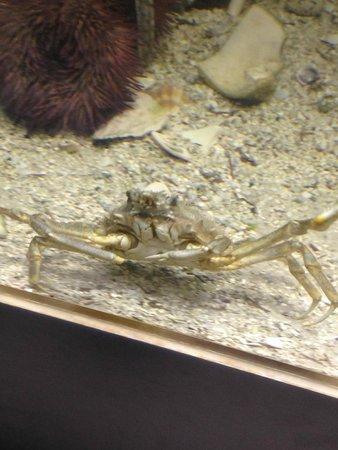 Clearwater Marine Aquarium: Hermit Crabs