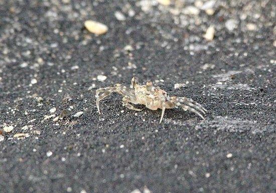 El Palmar Beach: Crab!!!!!!!!!!!