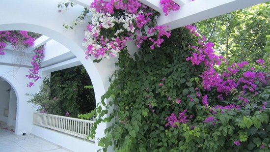 The Orangers Beach Resort & Bungalows: Lovely Flowers everywhere!