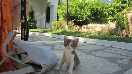The Orangers Beach Resort & Bungalows: One of the Kittens