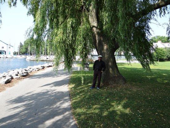 Kingston Waterfront: I am enjoying my lovely walk