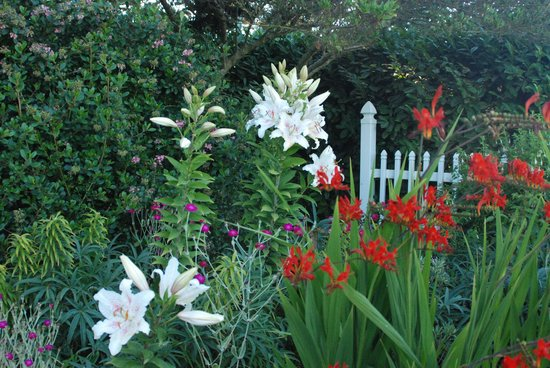 Sea Cliff Gardens Bed & Breakfast : Gardens