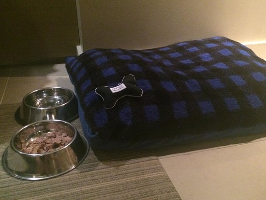 Hotel La Jolla, Curio Collection by Hilton: Our little Brussels Griffon, Penny, was treated like royalty by the hotel staff. Loaner dog bowl