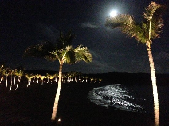 The Cove Eleuthera: Palm trees light up at night