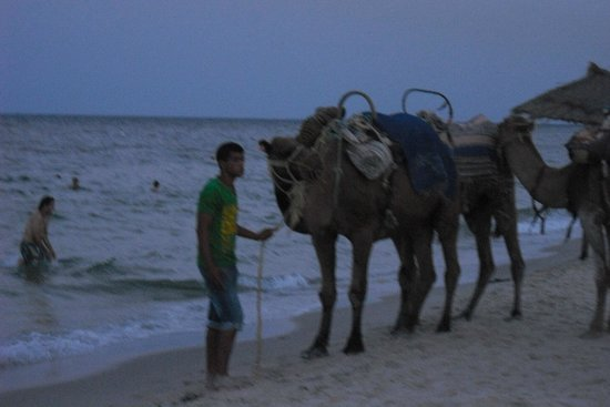 Hotel Abou Sofiane : camels on the beach