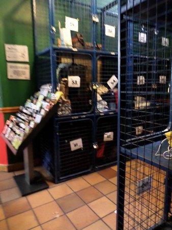 Avalon House : Storage lockers