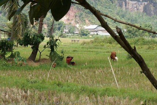 Abdi Homestay, Ikbal & Noni: Rijst veld
