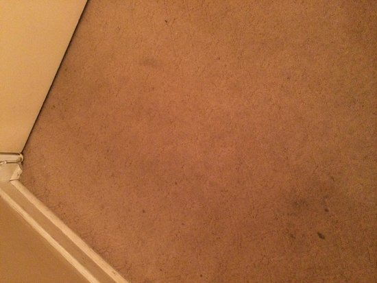 Garden Place Guest Houses : Filthy carpets
