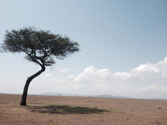 Oldarpoi Mara Camp: Masai Mara