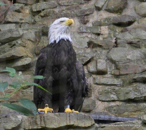 Dollywood : Eagle Mountain