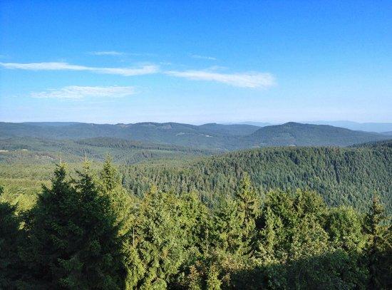 Couvent du mont Sainte-Odile : Aussicht auf die Vogesen