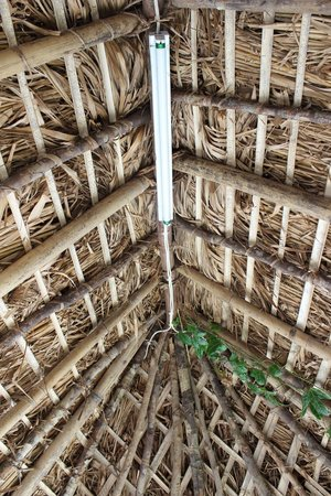 Eco Cafe: Thatched roof