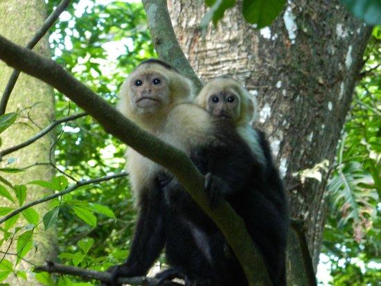 Hotel & Club Punta Leona: Monkey at Breakfast