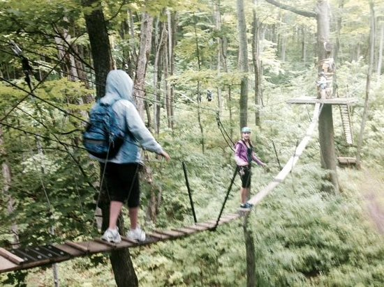 Scenic Caves Nature Adventures : Treetop Forest Canopy Walk, at Blue Mountains