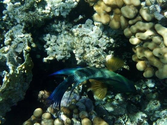 Mahmya Island: Plongée