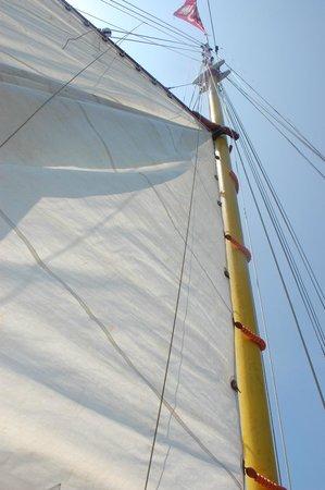 Ponta da Piedade : Sails