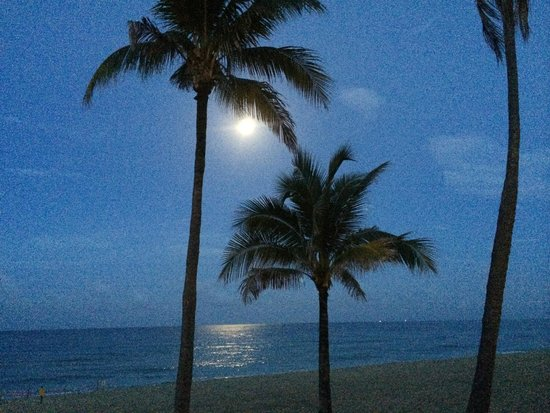 snooze : The view of the beach @ night with The moonlight reflecting off the sea.