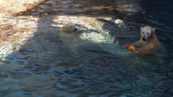Sea World: Polar bears