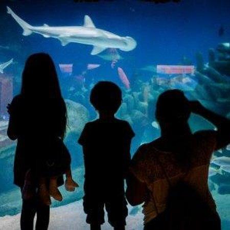 Sea Life London Aquarium: Watching sharks